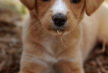 Puppies / by Artworks Wedding Cinema