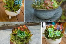 Succulents / by Alice Tomer