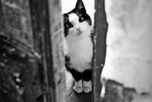 Chats Et Chatons! Cats / by Carla C.
