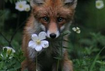 Flowers & animals / by Madi Moench