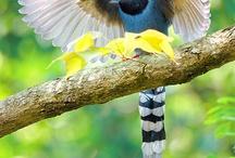Birds / by Tami Buckingham