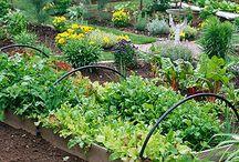 Edible Landscape Ideas / by Nanci Howe
