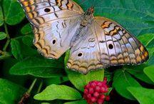 Butterflies, Moths & Dragonflies / by Susan Gendron Huotari