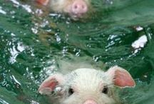I <3 Piggies! / Everything Pigs / by Chrissy Mowl