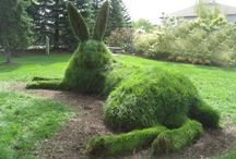 Garden Topiary / by Devera Brower