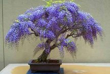Bonsai Trees / by Ann P