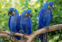 Birds / by Ellna Urquhart