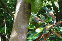 Tropical Fruit Trees / by Doris Bent