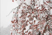 Winter / by Catherine Wood