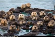 Otters / by Susan Bonk