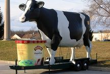 Til the Cows Come Home / by Turkey Hill Dairy