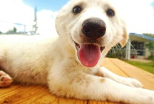 Happy Puppy / Who's a happy puppy! Big grins with happy puppy faces :) / by Nickie B