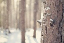 Winter / by Victoria Tebbs