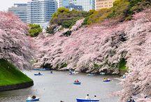 Tokyo bound / by Sabrina Strelitz