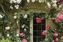Garden / by Sue Kruse