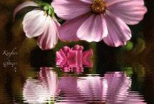 flowers / by Judy Molinari