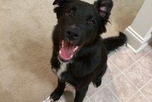 Macklin / We finally have a dog! Burt Macklin, FBI.  / by Michelle Felak