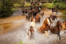 horses / by Kathleen Hames