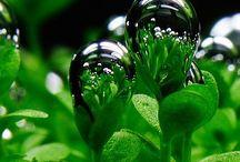 COLOR - Green / by Lisa Staffaroni