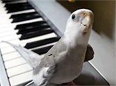 Wonderful bird........ / by Donna Slivka