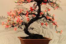 Bonsai / by Cookie Neumann