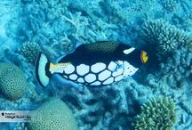 Underwater Mysteries in Maldives / by Shangri-La 's Villingili Resort & Spa, Maldives