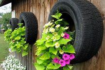 gardening / by Tina Niesen