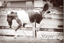 Horses / by Heather Dodgen