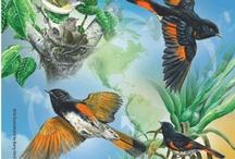 NATURE: Birds: EVENTS / by Deb Toor