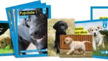 Sponsor a guide dog. X / by Issy Bennington!