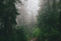 The great outdoors. / by Danielle Remian