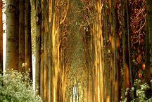 Path less traveled... / by Tisha Mccuiston { Life on Bramble Hill