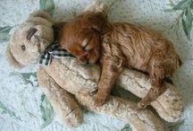 Cute Pets / by Sharon Koniak Elledge