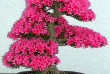 6. Bonsai World...Mini beauty awesome !...collection from all around the world. / by Lindawati Santosa