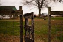 Sarginson Farm / by Missy Larson-Sarginson
