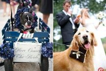 Real Wedding Pinning :) / by Kate Erskine