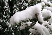Winter Wonderland / Chat/CVT/SM team decorating ideas / by Bridget Kehoe