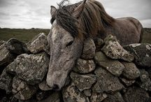HorseHeart / The place to find all the images that remind me that at my heart is a wild horse. / by Kate Rowan