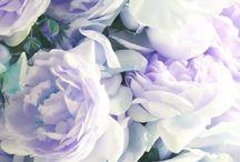 Flowers / Susan Marie tarafından
