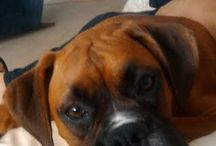 My pets / This is something my Boxers would do.... / by Olga C.