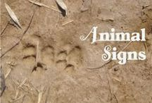 NE - Animal Signs / by Our Journey Westward