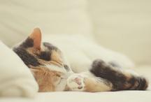 Animal Lover  / by Jessica Glovasa