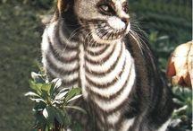 cats / by Adrienne Warren