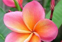Flowers / by Jennifer Moreno