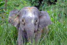 ELEPHANTS♥ / by Charis Dulcie Roberts