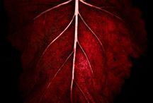 Burgandy Plum  Raisin / by Vicki Horton