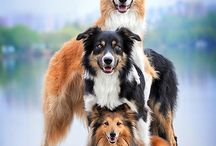 Adorable Dogs & Puppies ❤️ / Dogs and Puppies / by Donna Amerson