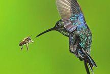 Hummingbirds / by Mary Howard