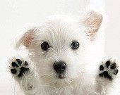 Adorable Pups, Kittens and Other Cute Creatures / by Randi Marshall