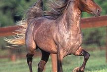 Animals-Horses / Beautiful horses of all kinds. / by Ellary Branden